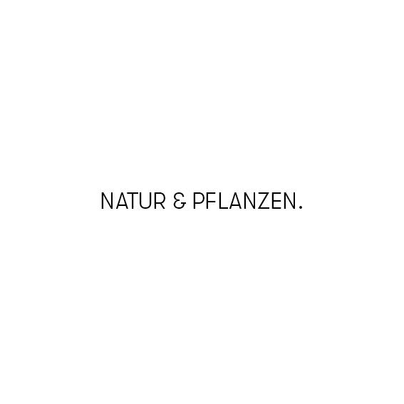 Thekla Luitz – Illustration – Natur – SCHRIFTZUG